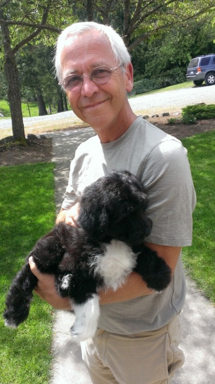 My father in law just picked up his new puppy - an Australian Shepard and poodle hybrid - and his name is Paco and I now want all of the puppies.