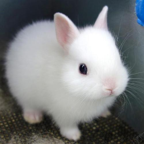 10knotes:  purebeachboho: aww bunny My lovely followers, please follow this blog immediately!