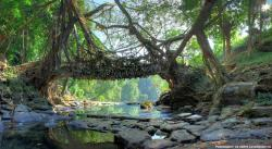 tumblush:    The Root Bridges of Cherrapunji