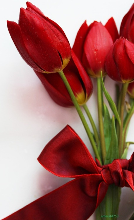 new found love for tulips! happy valentine's day indeed :)