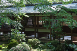 photography japan landscape trees nature architecture scenery building garden Sunlight Asia culture moss tradition Momiji Japanese maple tree