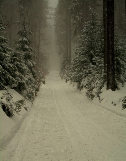 Dark Winter Forest, Poland photo via jess