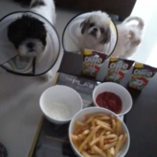 05.04.2013 Merienda time! ;) #bambam #precious #dogs #shihtzu #cute #merienda #fries #ChocO #sourcream @tinkleears #kuya #atejean #karen;) #houseupv #photoblog #memories #foodblog #food #2013 #summer2013 ;)