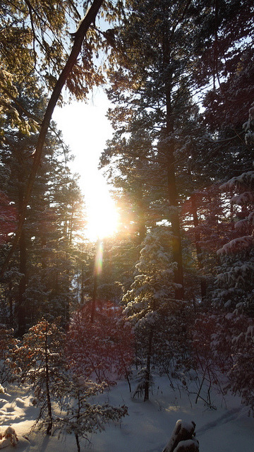A walk in the Colorado woods on Christmas Day, a set on Flickr.Merry Christmas from snowy Colorado. May your New Year be joyful.