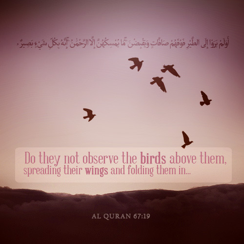 Islamic Quotes in english in urdu about love bout life tumblr in    Quran Quotes In English