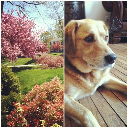 Perfect day 🐶🌸 (at Home)