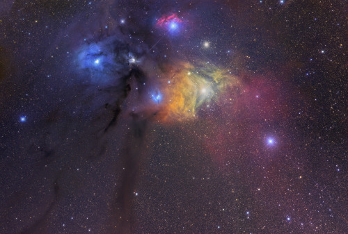 the-science-llama:  Reflection and Emission Nebulas— Rho Ophiuchi Cloud Complex Credit: Gerald Rhemann // Astrostudio