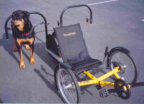 (dogpoweredscooter.com) Three things come to mind: 1.  This is fucking weird. 2.  People are really lazy. 3.  Jog with your dog like normal people!