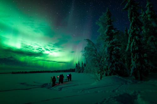 animinimalism:  Northern Lights and Arctic Magic (by The Aurora Zone) Need to see this now.