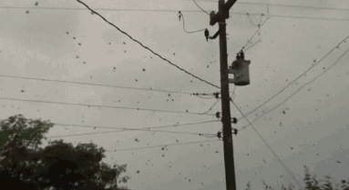 It's Raining Spiders in Brazil, Probably a Sign of Apocalypse [Click to animate] It's raining man-killing beasts.