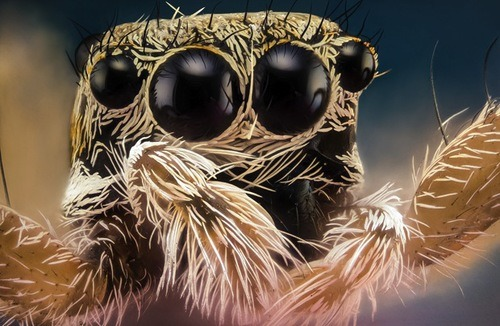 Macro Insects by Photographer Nicolas Reusens http://bit.ly/15V0ays