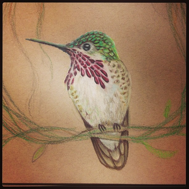 "Close up of #hummingbird detail. ""Calliope"" #colorpencil #constantlyconstance #workinprogress #prisma"