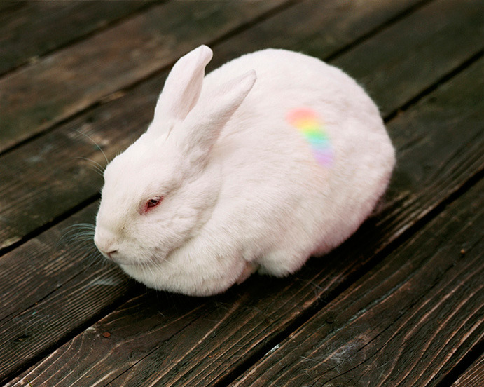 Hannah Whitaker  White Rabbit, 2007