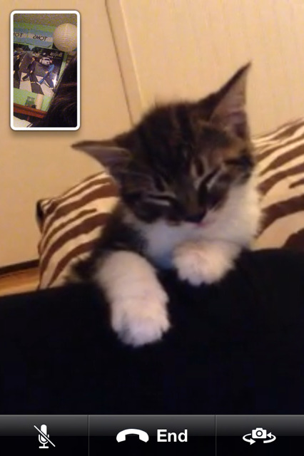 LOOKK HOW CUTE MY FRIENDS KITTEN IS