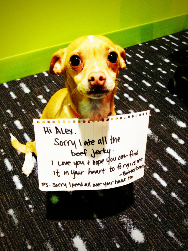 dogshaming:  Butterbeans ate ALL the jerky.  Butterbeans calls a truce.  View Post