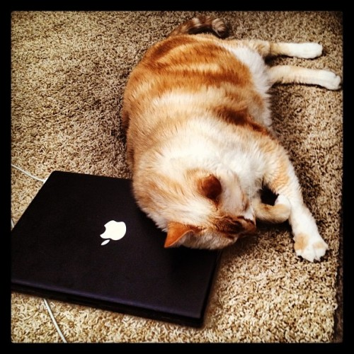 Romeo napping on my MacBook 🐱#cats