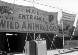 Bert Pettus Wild AnimalsMain Entrance Wild Animal ZooAll Alive Circus banner with text (sign painting)