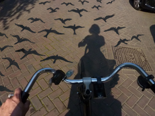 fer1972:  The birds and I are leaving town by Maria Emanuela