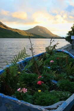 visitheworld:  The boat garden, Connemara, Ireland (by pamdao).