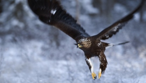 Baby-snatching eagle video now earning money for scholarship      A Montreal school offers a good lesson on how to turn a hoax into a charitable cause.