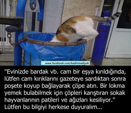 yardım help hayvanlar