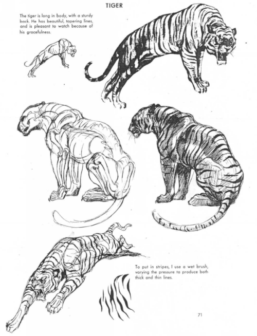 frostbackcat:  artmender:  zoocanvas:  From The Art of Animal Drawing by Ken Hultgren  kitties  Reblogging because I know too many people who don't know what a cat looks like xD