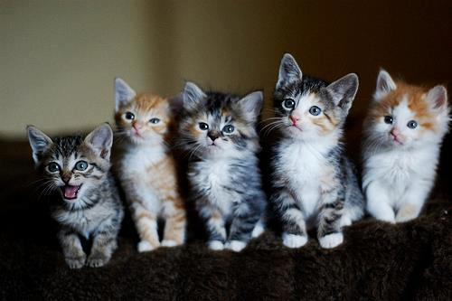 Different kinds of kittens!!!<3