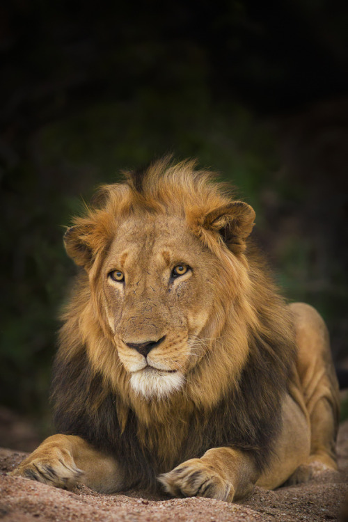eqiunox:  Motswari King  by Mario Moreno on Fivehundredpx.
