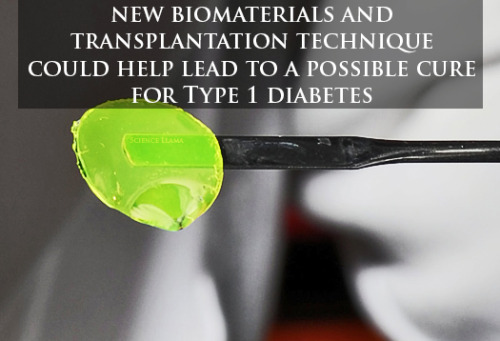 foliageofawareness:  the-science-llama:  Biomaterial shows promise for Type 1 Diabetes treatment Using a hydrogel containing insulin-producing cells, the researchers were able to inject and successfully graft the cells into mice. The diabetes was reversed in as little as 10 days. The hydrogel protected the pancreatic islet (hormone producing) cells during injection and once they degraded safely, released growth factors to induce blood vessel growth which connected the new cells to the injection site and supplied nutrients to keep them alive. However, we don't know if it will work in people yet because they used genetically identical mice, ruling out any possibility of immune response to the material. The next step, researchers say, is to address the immune acceptance issues. Via Georgia Tech — May 8, 2013Edward A. Phelps, Et al. // Biomaterials - June 2013  Very exciting. Maybe there will be a cure in my lifetime.