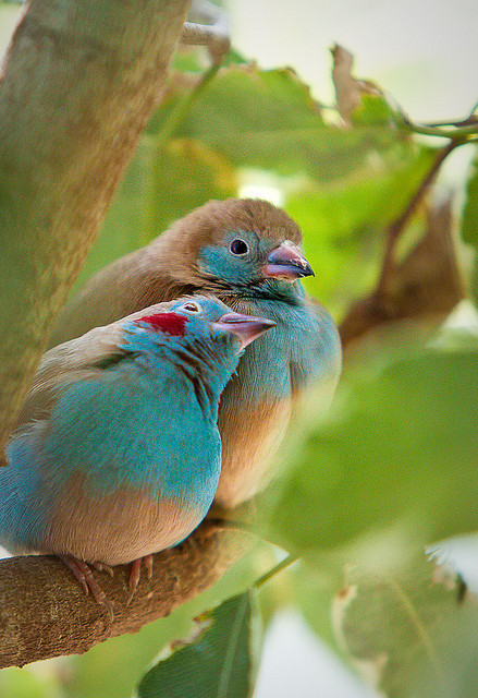 fat-birds:  Lean on me :) by jessi.bryan on Flickr.