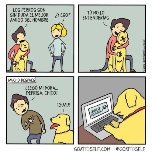 perros internet historial humor gráfico GTS