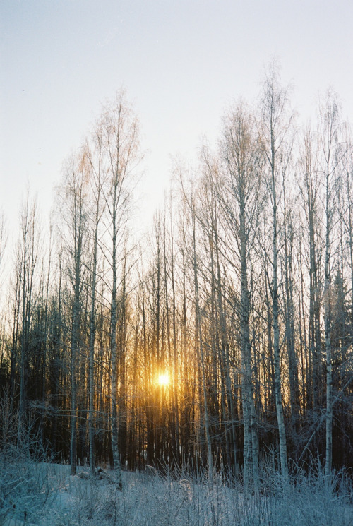 h4ilsham:  Birch (by Svoctor)