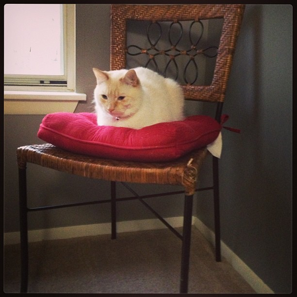 Someone likes the new chairs :) Thanks @ktkruk! #photos #arnold #arnie #cat #catsinrva #catsofinstagram #chair #furniture #red #igers #igdaily #igaddict #iphone5