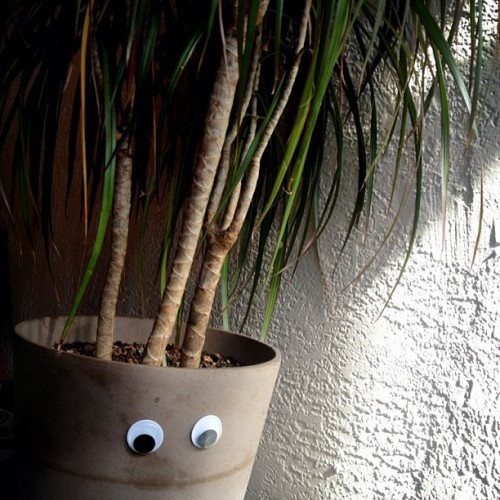 The plants at Wicked Grounds Cafe are so friendly! #VandalEyes