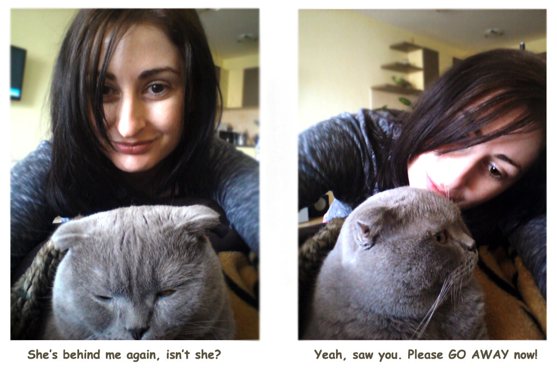 This is me and my Scottish Fold Charlie. He is so grumpy whenever I wake him up from a good sleep. But I just can't help it, because then I feel like he's a human being, the way he acts and reacts   via furrytalk.com