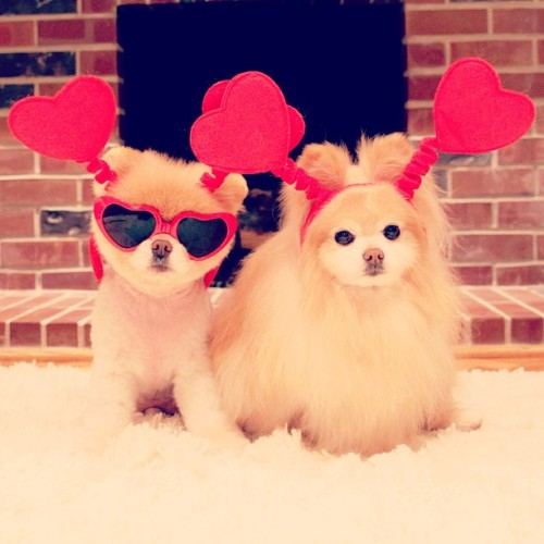 girlyguess:  Happy valentine's day! ♥