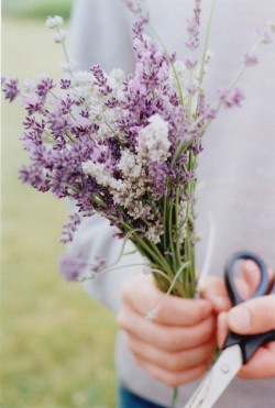 palides:  untitled by abbytrysagain on Flickr.  lavender to soothe the soul and wash away the pain from the relentless disappointment of everyday life and relationships.