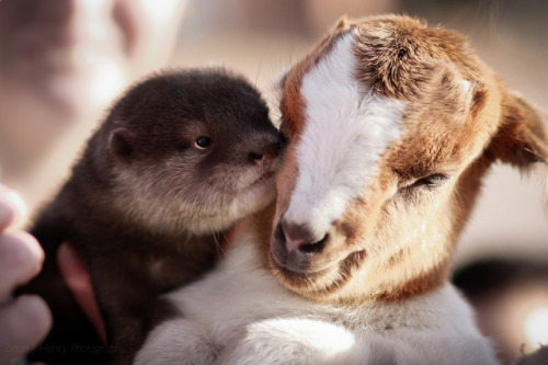 wild-earth:  Interspecies friendships are the cutests thing ever. Period.  Cutest thing ever