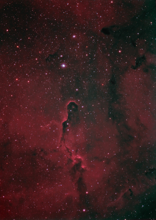 h4ilsham:  IC1396A The Elephant's Trunk Nebula, HaRGB (by write_adam)
