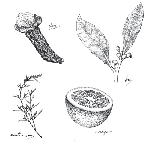 A second set of botanical illustrations.