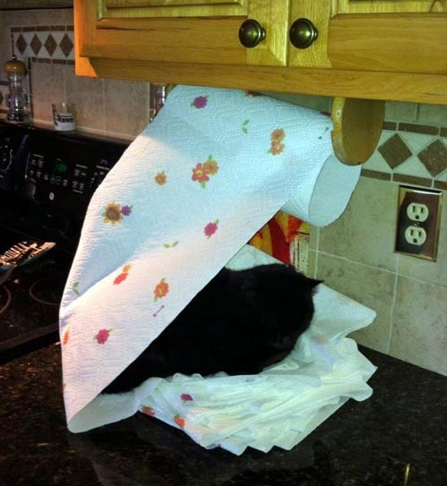 tastefullyoffensive:  Cat Nest[via]  On ur paper towels.