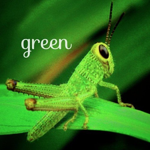 #2008 #macro #canong9 #macrophotography #favorite #nature #green #animals #nostalgia #instagood #instamood  (at Maryridge, Tagaytay)