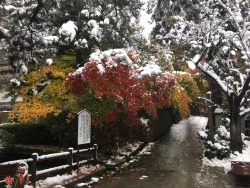 Fall colors 🍁and snow ⛄️ in Yamagata (November 2016). More here: http://www.spoon-tamago.com/2016/11/10/following-in-the-footsteps-of-matsuo-basho/ #allaboutjapan #allabouttohoku