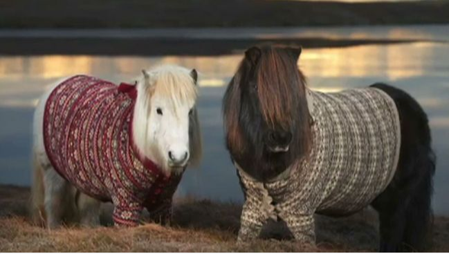 omg. mini ponies in sweaters.