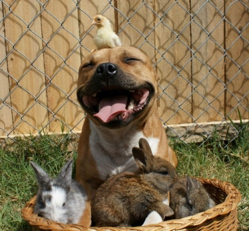 HAPPY EASTER WEEKEND from the cutest dog / chick / bunny combo ever to be found on the Internet!! Click through the photos to see more…