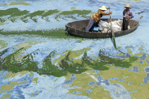 Chao Hu is one of the five largest freshwater lakes in China. Heavy use of the lake in recent years has led to eutrophication and silting. Due to China's rapid economic growth, the lake is now one of China's most polluted lakes.  Picture by Jianan Yu / REUTERS