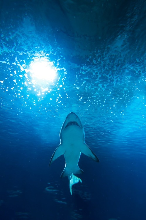 eqiunox:  Jaws by Davide Vitali on Fivehundredpx