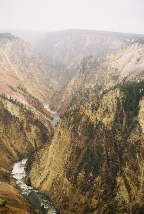 cervid:  Canyon at Yellowstone (by Walk Robins)