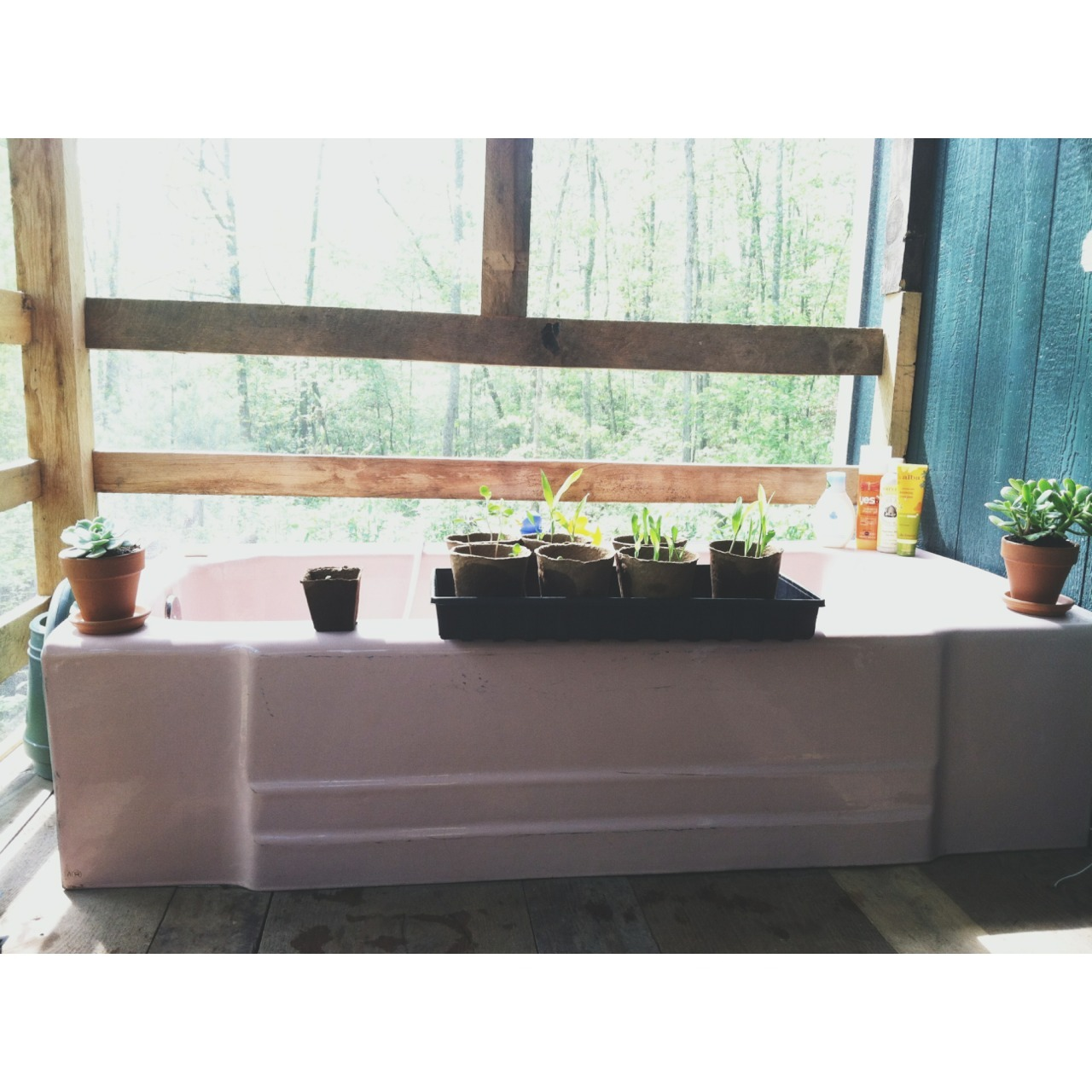 Seedlings sunbathing on the porch. Watermelon + corn + sunflowers