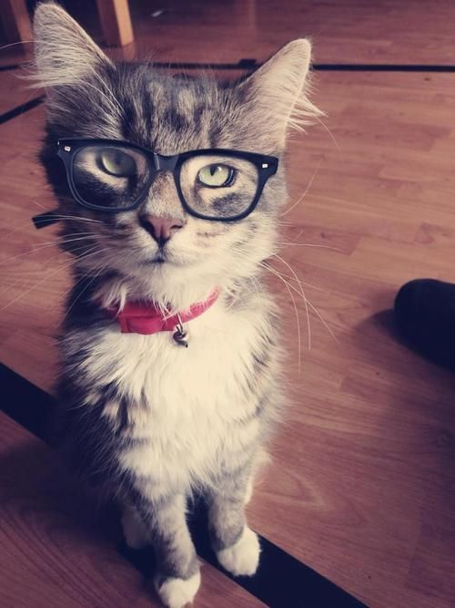Nerdy KiTTY!